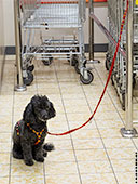 287-dog-supermarket-frankfurt-th