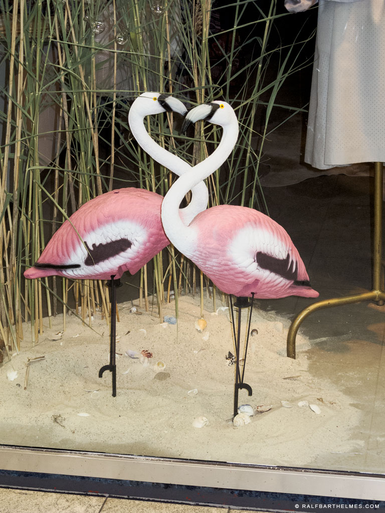 422-foto-shopping-window-flamingos